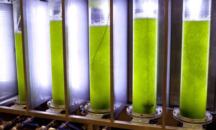Un bio-carburant à partir de micro-algues issues de station d'épuration