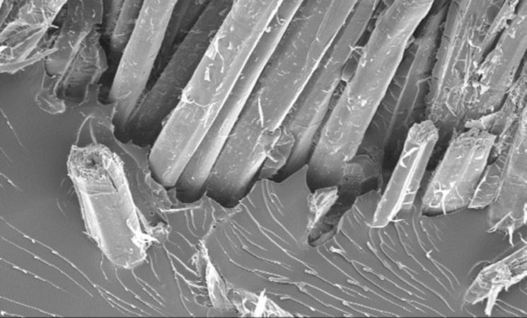 Webinaire ACD Innovation: Le chanvre dans les matériaux composites : applications et propriétés